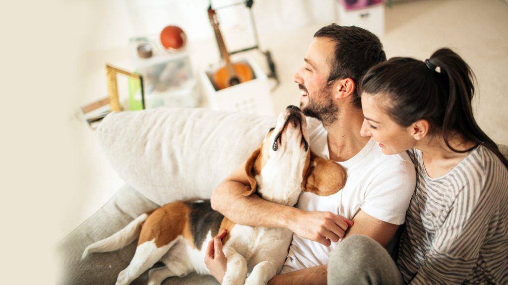 un couple heureux avec un chien dans leur logement neuf