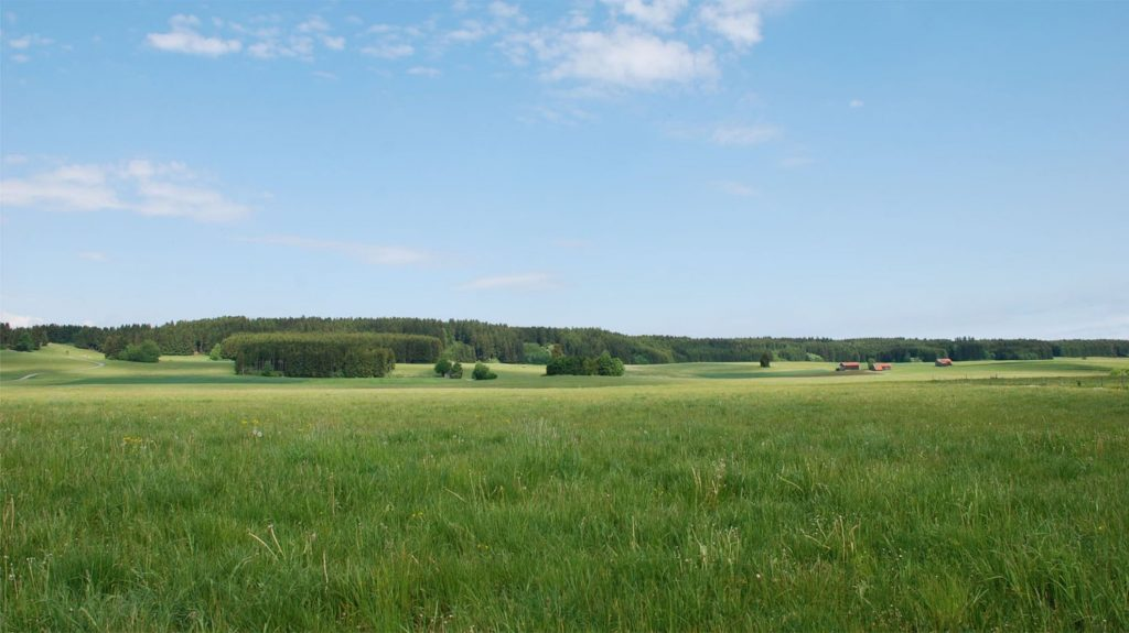 Vaste terrain verdoyant pour future construction de maisons neuves